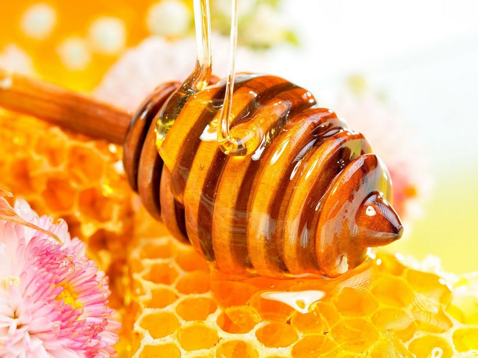 Мед содержит лактобациллы и бифидобактерии?!